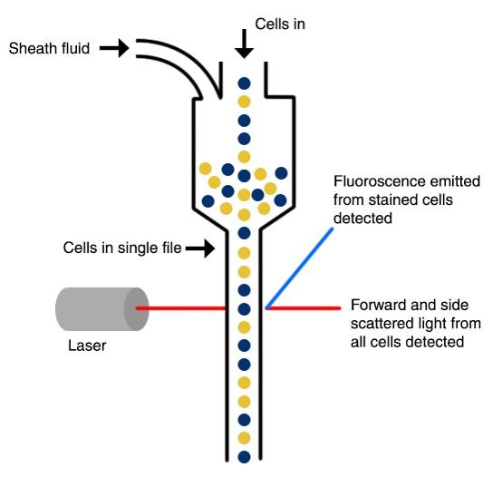 نحوه عملکرد دستگاه فلوسایتومتری